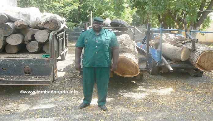 Tambacounda: Gros coup de filet des eaux et forêts, 200 troncs d'arbre, 17 charrettes et 3 véhicules saisis.