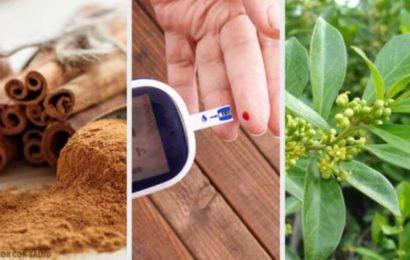 santé: 5 plantes médicinales qui aident à contrôler le diabète