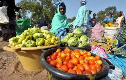 Sénégal/Sécurité alimentaire : 548 000 personnes menacées