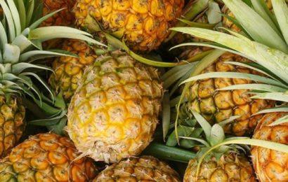 Espagne : 67 kilos de cocaïne retrouvés dans des ananas