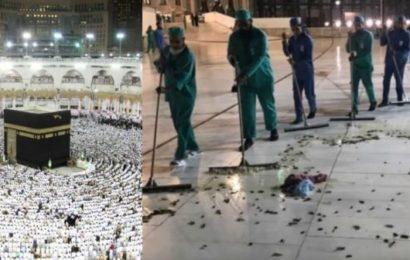 Arabie-Saoudite : Des cafards envahissent la Mecque (vidéo)